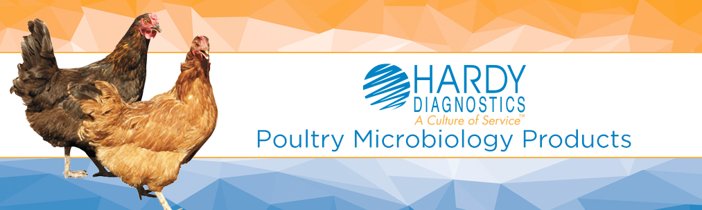 Poultry Chicken Microbiology Banner