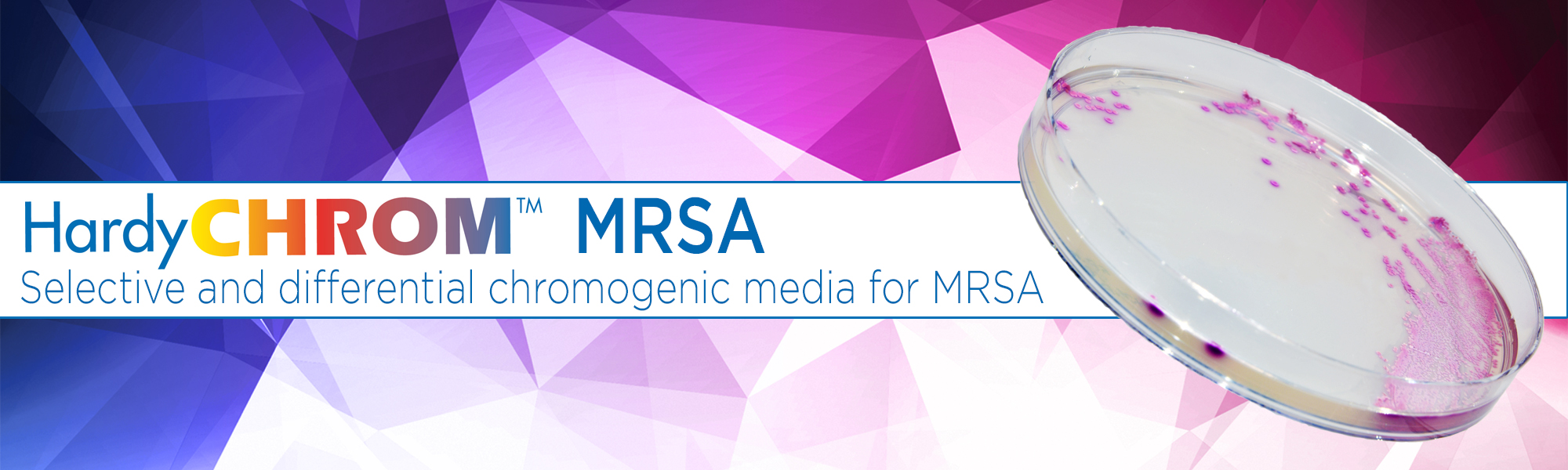 HardyCHROM MRSA Chromogenic selective and differential media for MRSA Methicillin resistant staphylococcus aureus
